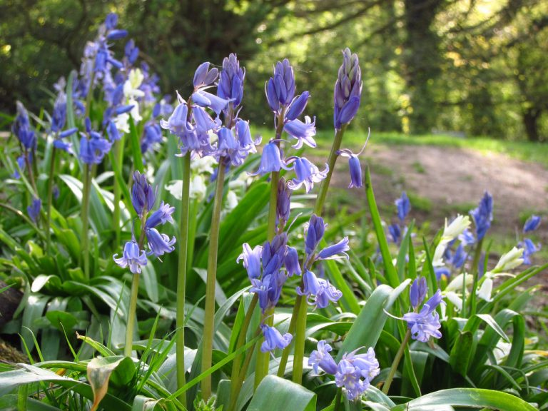 Bluebells, Cockley Wood Weddings